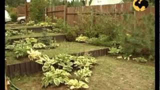 видео Декоративный плодовый сад в ландшафтном дизайне