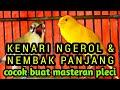 Kenari Ngerol Dan Nembak Cocok Untuk Dijadikan Masteran Pleci Agar Nembak Panjang  Mp3 - Mp4 Download