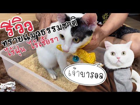 รีวิวทรายแมวจากธรรมชาติ ไร้ฝุ่น ไร้กลิ่น ป้องกันเชื้อแบคทีเรีย มีจริงหรือ?