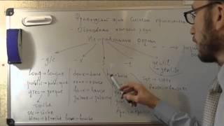 Французский язык: Неправильные формы прилагательных