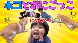 可愛い 猫 と鬼ごっこ あそび!ネコ VS brother4 キッズ ⚡️予想外 の終わり方になる 仲良し兄弟 brother4