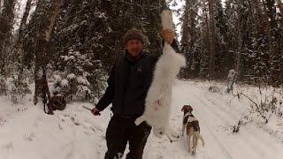 Hunting the hare! Охота на зайца с русскими гончими!!!