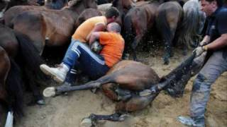 stop horses slaghter