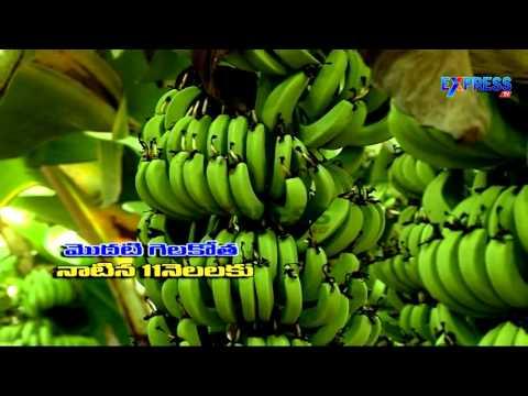 Horticulture crops Organic farming in Scientific method by Sambi Reddy Guntur District - Express TV