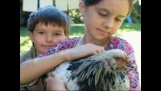 How To Build A Chicken Coop With Easy Step By Step Instructions