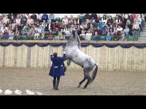 Stunt Horses, Liberty, Tricks, Jumping, Fire. Full Stunt Show Act 1 of 2