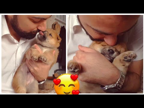 Hugging my puppy too long ❤️ / Shiba Inu puppies