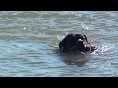 Rottweiler - Safe Exercise (3)