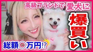 【購入品】愛犬おもちの✨初の購入品紹介✨可愛いお洋服とか買いまくったら総額が……www【癒し】