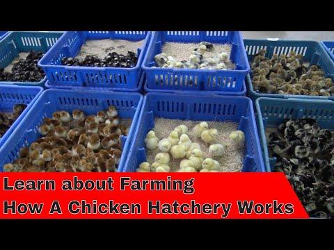 Tour How A Hatchery Works