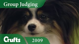 Papillon wins Toy Group Judging at Crufts 2009 | Crufts Dog Show