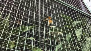 #klbirdpark #hornbill птица-носорог