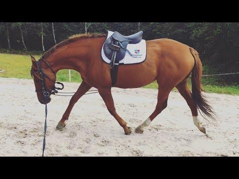 HOW I LUNGE MY HORSES // v important part of flatwork guyys