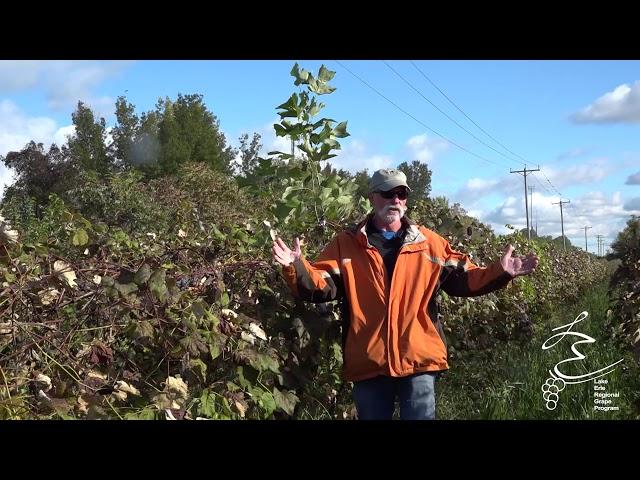 Late Season Weed Control - LERGP Podcast #93