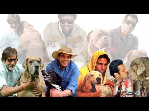 15 Bollywood actors and their favorite Dogs