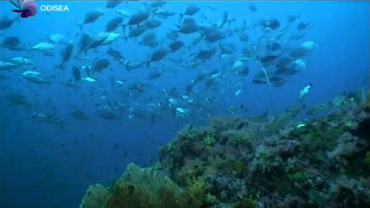 La.vida.secreta.de.los.peces.(Movimiento).(Intro).avi