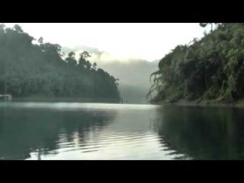 Gibbon calls at sunrise. Khao Sok National Park. Surat Thani. Thailand.