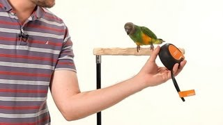 How to Make Your Parrot Less Fearful   Parrot Training
