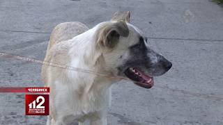 Стая диких собак держит в страхе весь район. Видео!