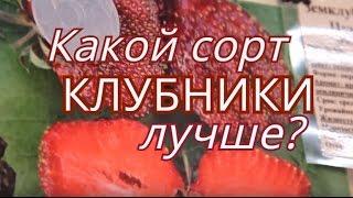 Сорта клубники. Ответ специалиста.(, 2016-05-02T13:47:49.000Z)