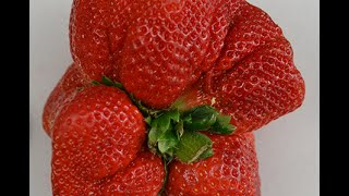 Guinness World Records-Strawberry grown in Japan breaks weight record held for 32 years