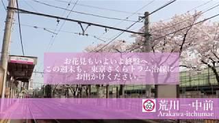 【2018.03.29】東京さくらトラム 沿線の桜情報4(最終回)