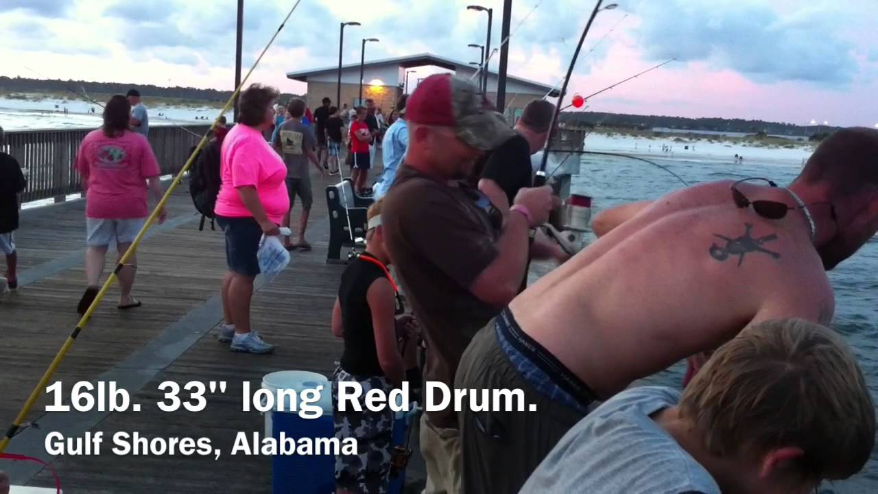 Fishing at gulf state pier gulf shores alabama youtube for Gulf shores fishing report