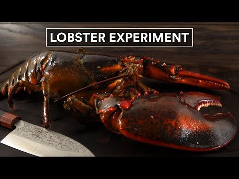 GRAPHIC: 4 Ways to COOK LOBSTERS, Sous Vide vs Boiled!