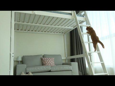 2층 침대를 샀더니 고양이들이 난리가 났어요