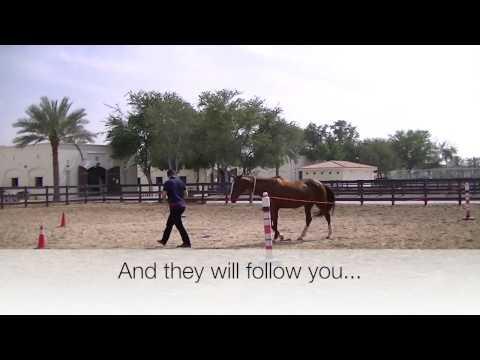 Horse Assisted Leadership Seminar in Dubai
