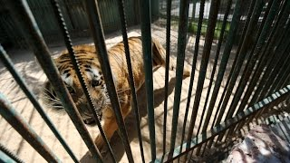 Gaza zoo puts starving animals up for sale