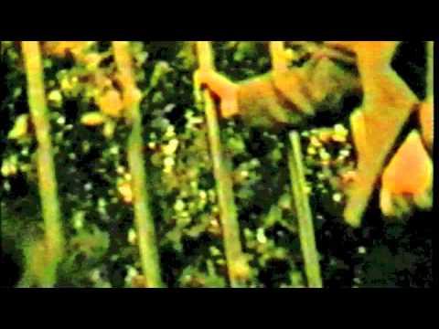 Sangeeta - Pyar Ka Hai Bairi yeh zamana sajna - (OFFICIAL VIDEO)