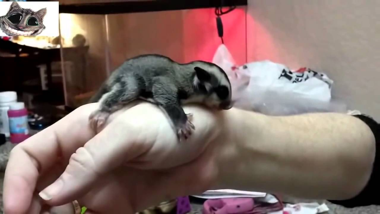 Uncategorized Funny Videos Of Animals For Kids funny cute baby animals compilation 2015 youtube