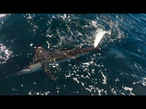 Record White Marlin On Bluefin Tuna Fishing Charter With Reel Deal - Cape Cod, Captain Bobby Rice