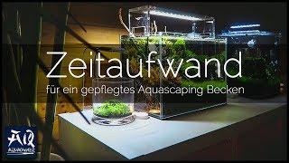 ICH HABE KEINE ZEIT DAFÜR! | Zeitaufwand für ein gepflegtes Aquascaping Becken | AquaOwner