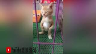抖音可爱的动物系列(4)------战斗吧猫咪们