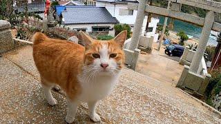 猫島で神社に行ったら野良猫がゴロゴロ言いながら付いてきた
