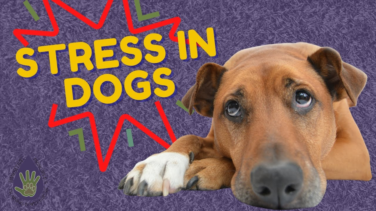 How To Deal With Stress in Dogs Using Essential Oils