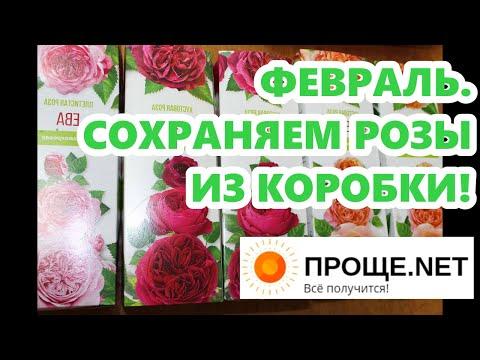 Февраль. Сохраняем розы
