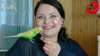 Papużka falista Stefan - najmniejszy zawodnik III Mistrzostw Polski Ptaków Gadających