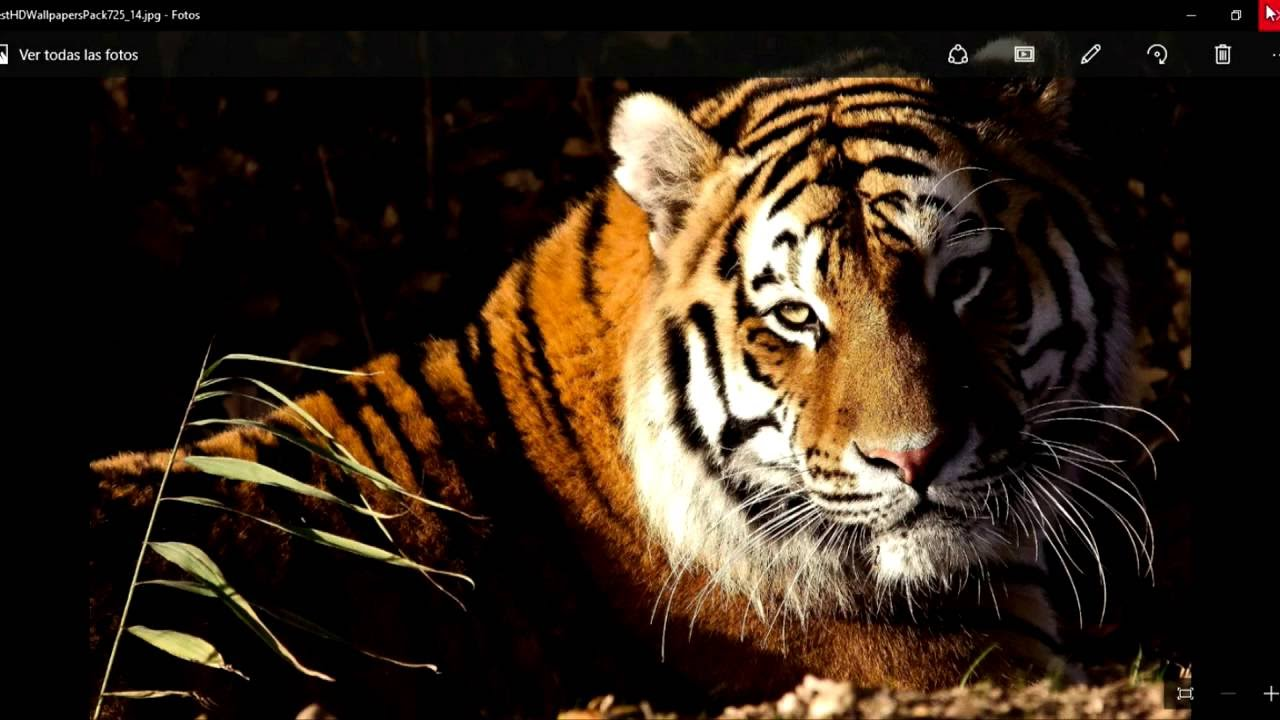Im genes de animales en hd para fondo de pantalla youtube for Fotos para fondo de pantalla de escritorio