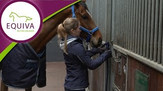 EQUIVA Basics: Das Pferd anbinden