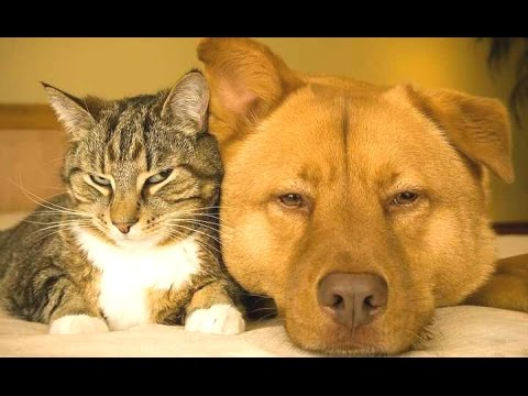 Cats And Dogs Friends Forever Compilation NEW HD YouTube - Dogs annoying cats with friendship
