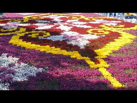 LOLA GUL FESTIVALI GILAM HAQIDA VIDEO | Лола фестиваль гул хакида малумотлар