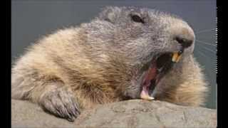 Kid Spatula - Beaver