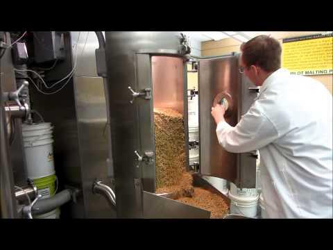 Malting Barley - Kilning