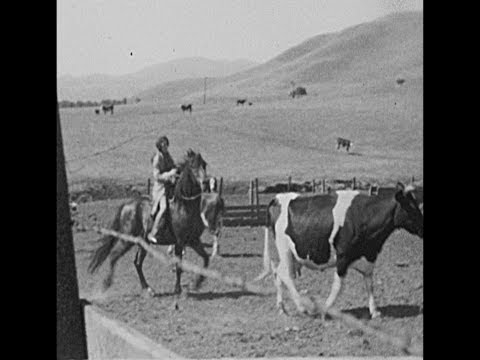 Roundup And BBQ In Danville, CA - 1934