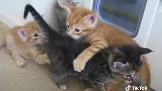 Cute kittens fight malayalam comedy film comedy