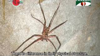 Nature and Life - Episode 240 (Cave and Cave Dwelling Animals)