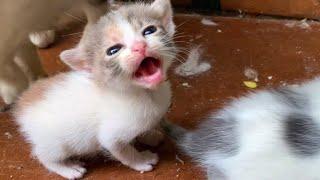 Gatitos llorando a gritos por mamá gata